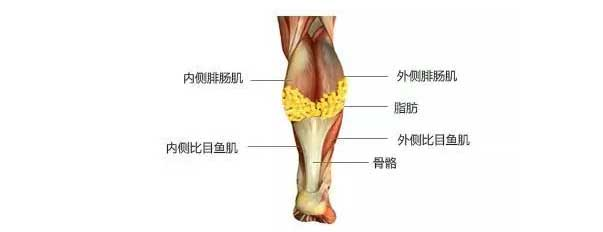 美莱是如何瘦小腿肌肉